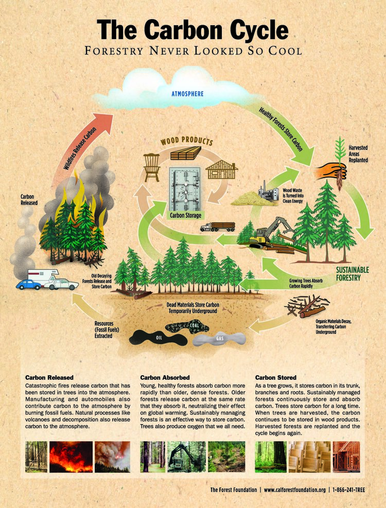 Forests and Carbon Sequestration Poster